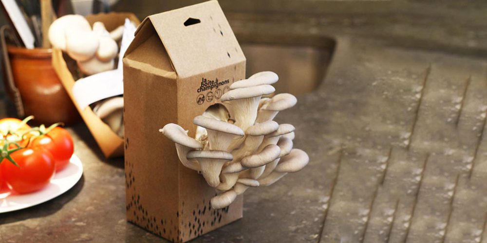 boite-a-champignons made in france
